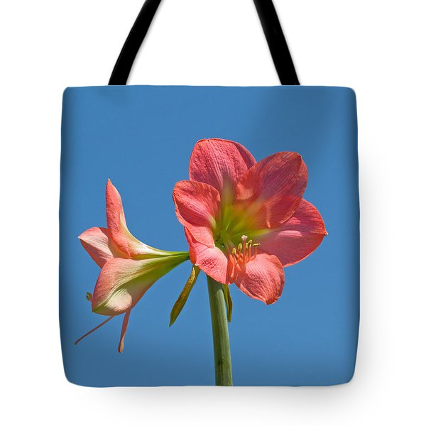 Pink Amaryllis Flowering In Spring Tote Bag by Allan  Hughes