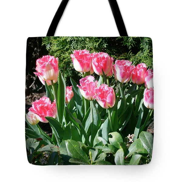 Pink And White Fringed Tulips Tote Bag by Louise Heusinkveld