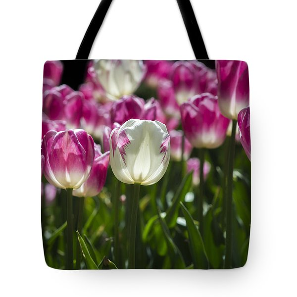 Tote Bag featuring the photograph Pink And White Tulips by Angela DeFrias