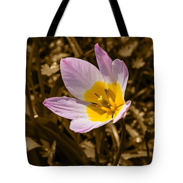 Pink And Yellow Tulip On Sepia Background Tote Bag