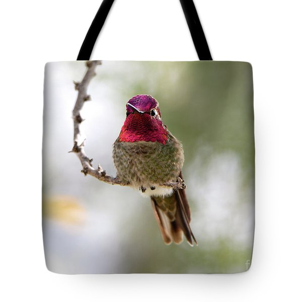 Pink Anna's Hummingbird Tote Bag