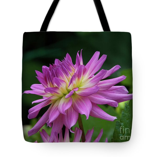 Pink Dahlia Tote Bag by Glenn Franco Simmons