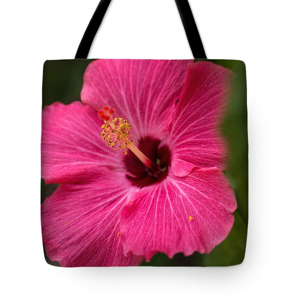 Pink Hibiscus Tote Bag by Dorothy Cunningham