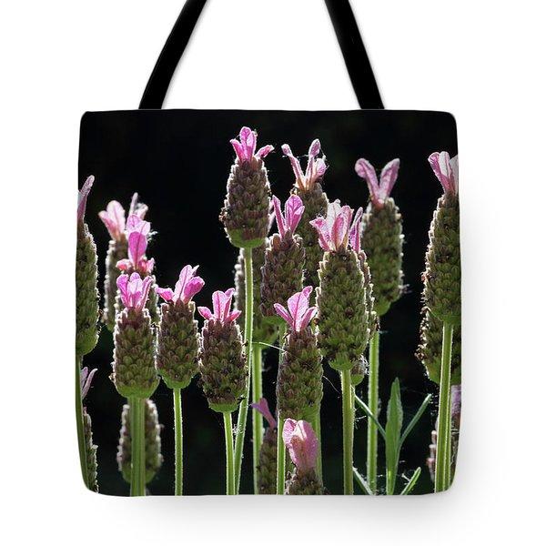 Pink Lavender Tote Bag