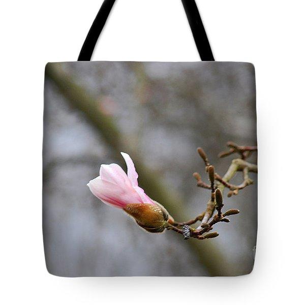 Pink Magnolias 20120321_54a Tote Bag
