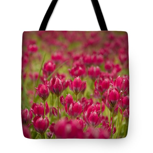 Pink Parade Tote Bag by David Warrington