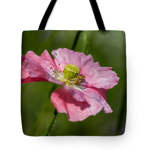 Pink Poppy Tote Bag by Martina Fagan
