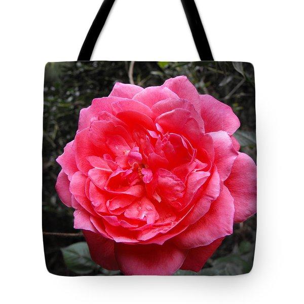 Pink Rose Tote Bag by Adam Cornelison