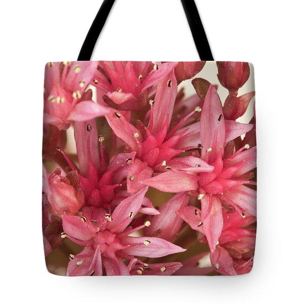 Pink Sedum Flower Macro Tote Bag by Sandra Foster