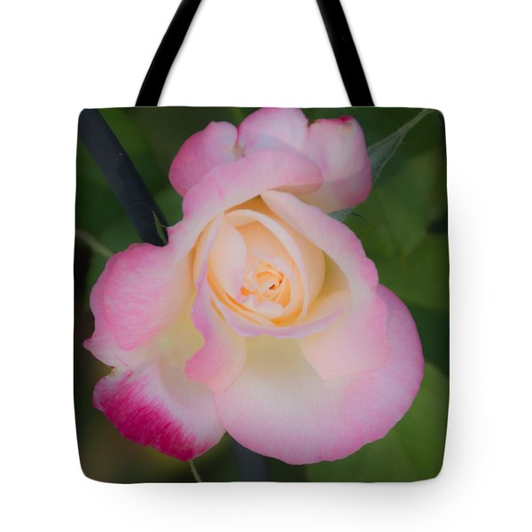 Pink Tinged Rose Tote Bag