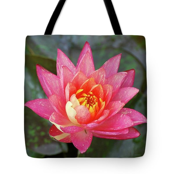 Tote Bag featuring the photograph Pink Water Lily Beauty by Amee Cave