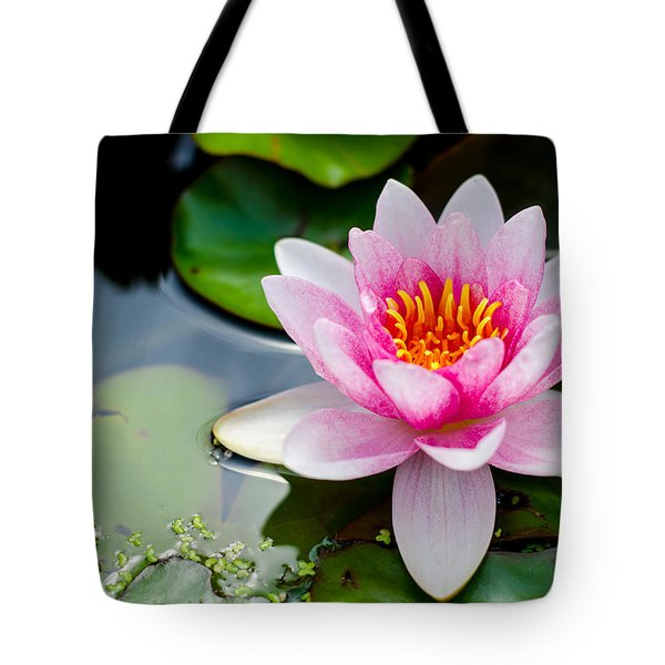 Pink Waterlily Tote Bag by Daniel Precht