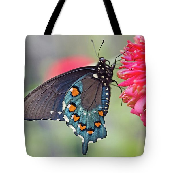 Pipevine Swallowtail Butterfly Tote Bag