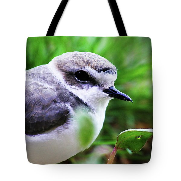 Tote Bag featuring the photograph Piping Plover by Anthony Jones