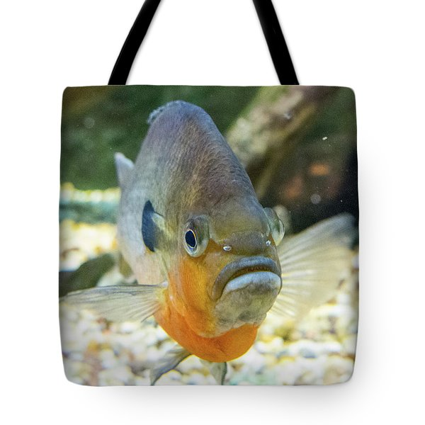 Piranha Behind Glass Tote Bag