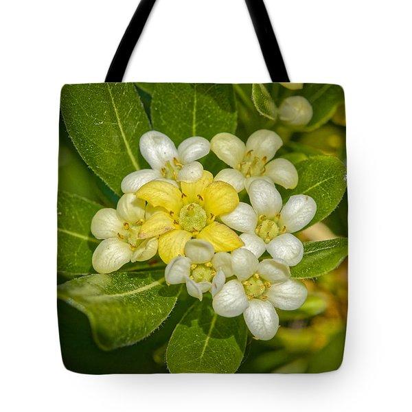 Pittosporum Flowers Tote Bag