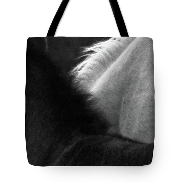 Tote Bag featuring the photograph Placitas 9 by Catherine Sobredo