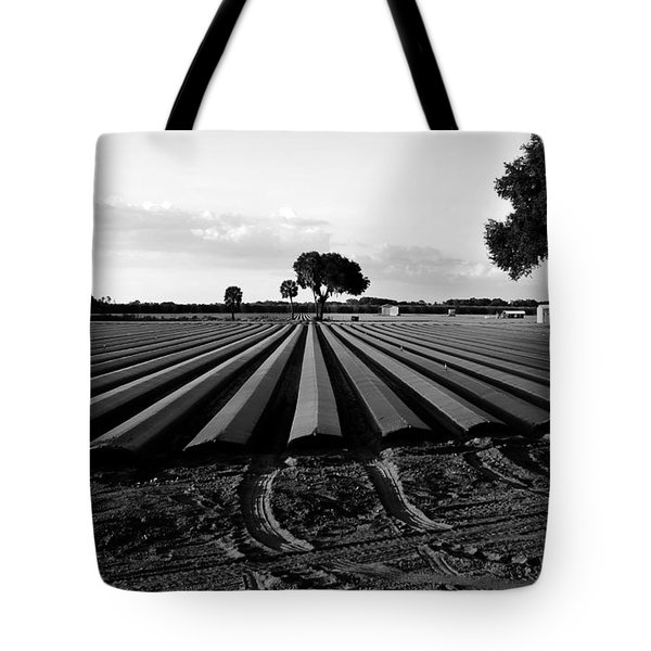 Planted Fields Tote Bag by David Lee Thompson