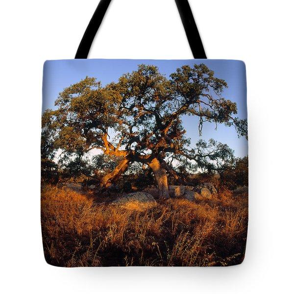 Plateau Light Tote Bag