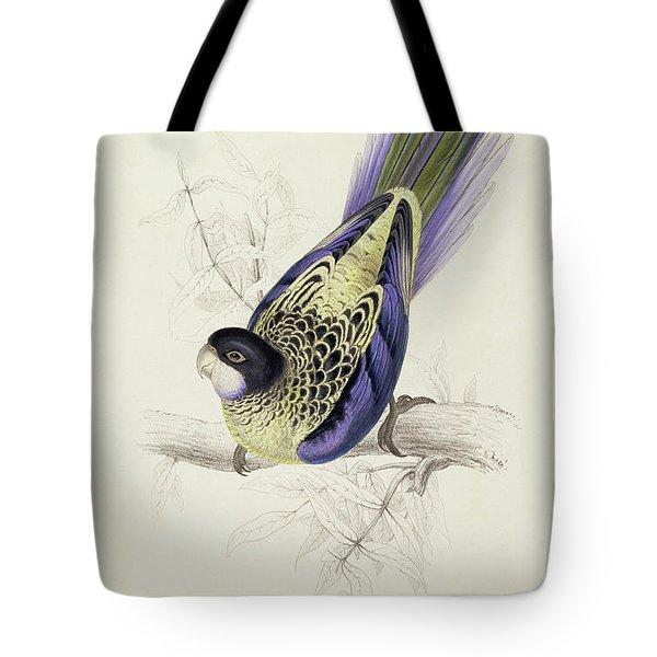 Platycercus Brownii, Or Browns Parakeet Tote Bag by Edward Lear