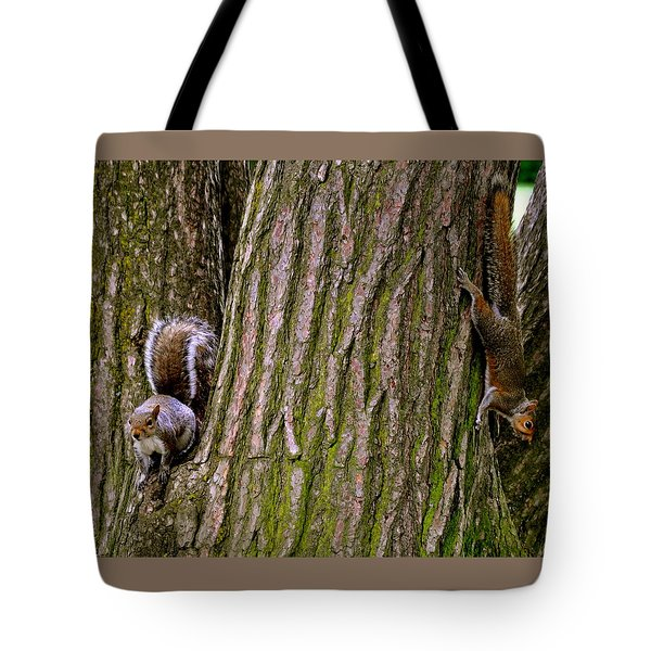 Playful Squirrels  Tote Bag