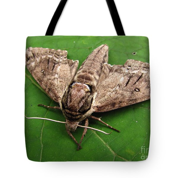 Plebeian Sphinx Moth Tote Bag