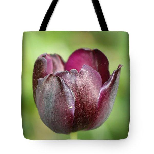 Plum Tulip Tote Bag