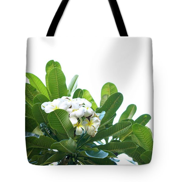 Tote Bag featuring the photograph Plumeria by Cindy Garber Iverson