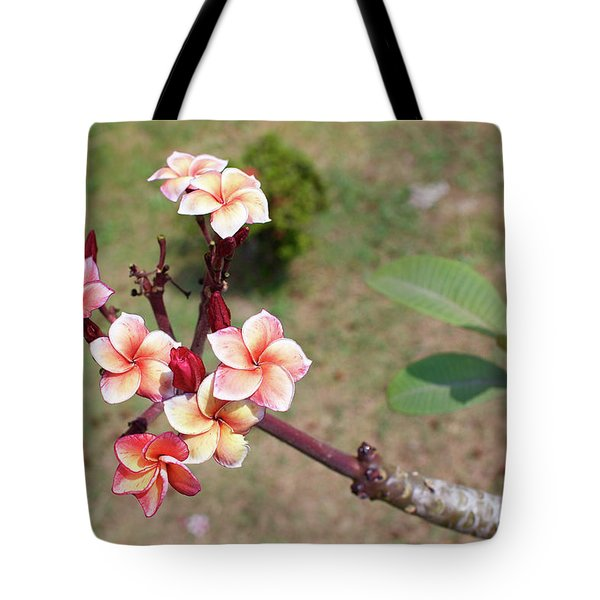 Tote Bag featuring the photograph Plumeria Flowers by Jingjits Photography