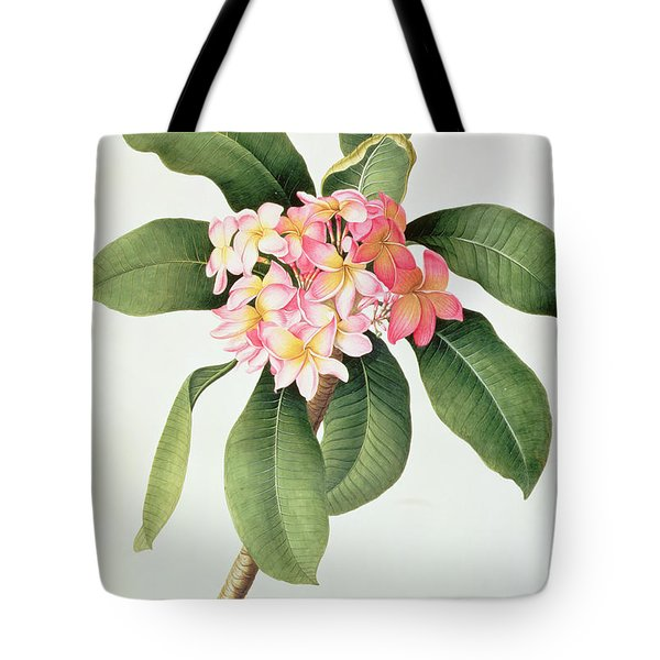 Plumeria Tote Bag by Georg Dionysius Ehret