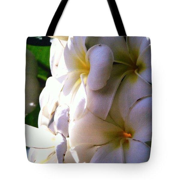 Plumeria In The Sun Tote Bag by Alohi Fujimoto