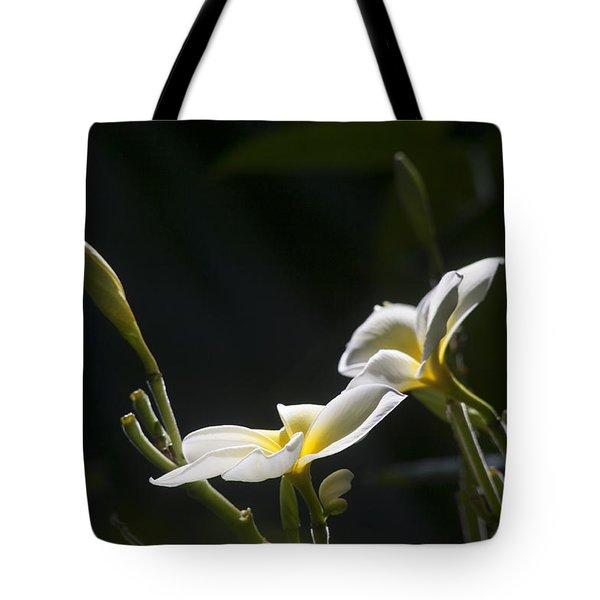 Plumeria Tote Bag by Morris  McClung