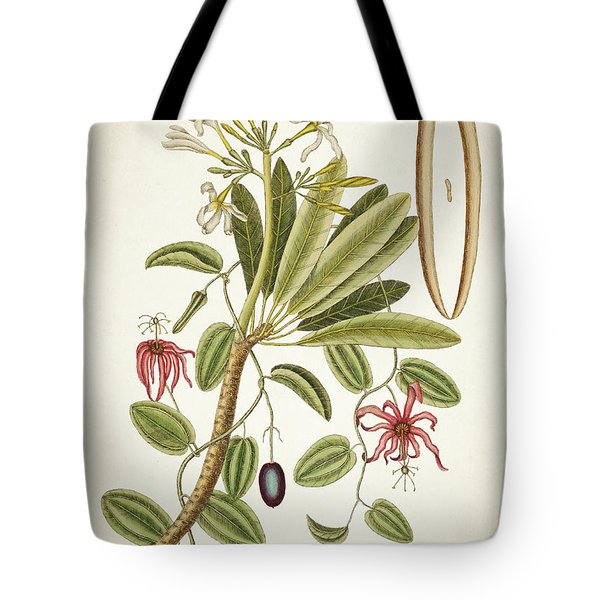 Plumeria Obtusa Botantical Print Tote Bag