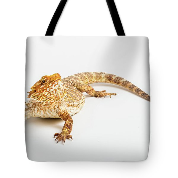 Tote Bag featuring the photograph Pogona Isolated by Benny Marty