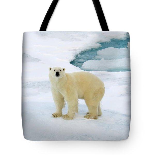 Polar Gaze Tote Bag