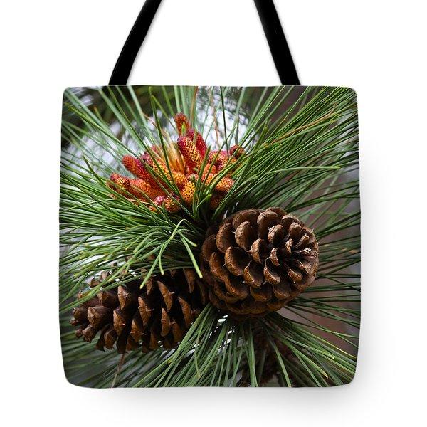 Ponderosa Pine Cones Tote Bag by Karon Melillo DeVega
