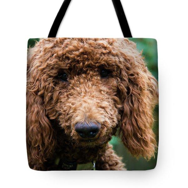 Poodle Pup Tote Bag