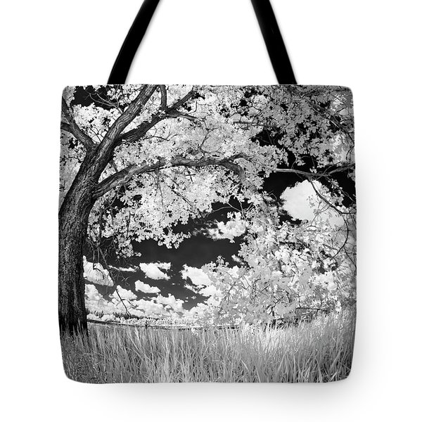 Poplar On The Edge Of A Field Tote Bag