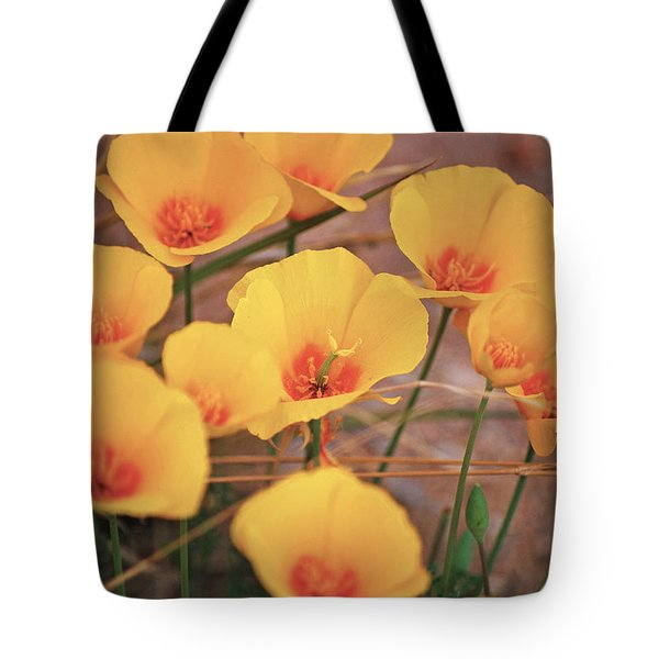 Poppies On Mount Lemmon Tote Bag