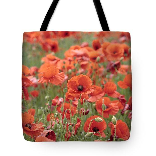 Poppies Tote Bag by Phil Crean