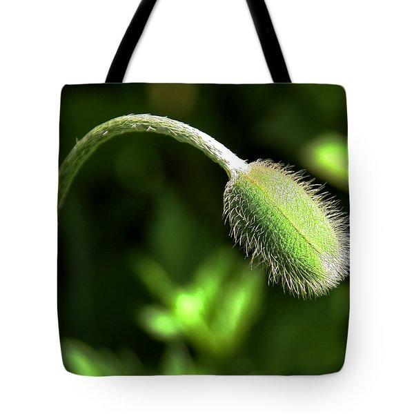 Poppy Bud In Sunlight Tote Bag