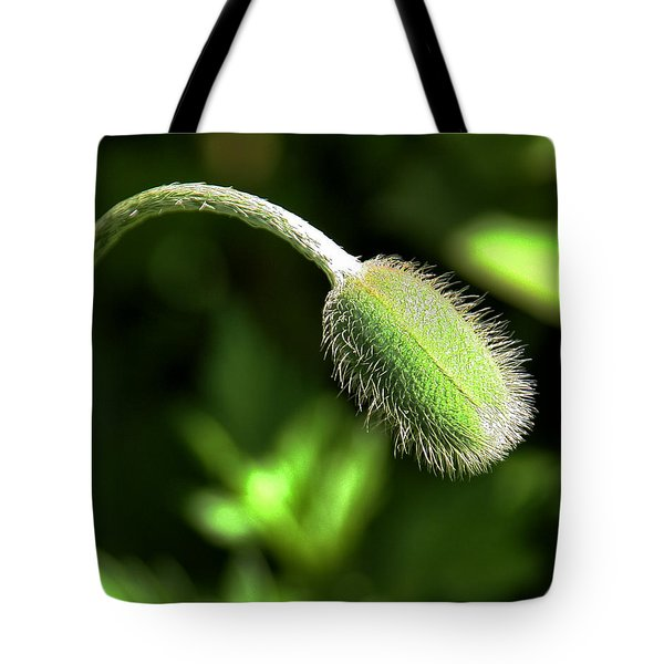 Poppy Bud In Sunlight Tote Bag