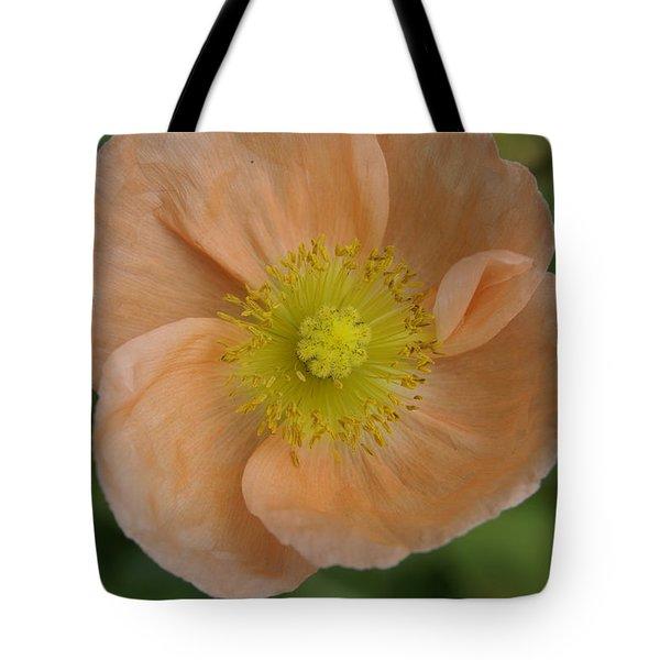 Poppy Tote Bag by Heidi Poulin