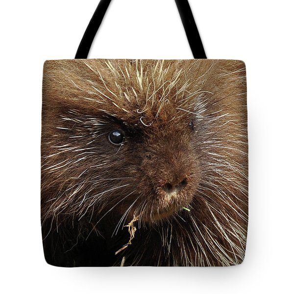 Porcupine Tote Bag by Glenn Gordon