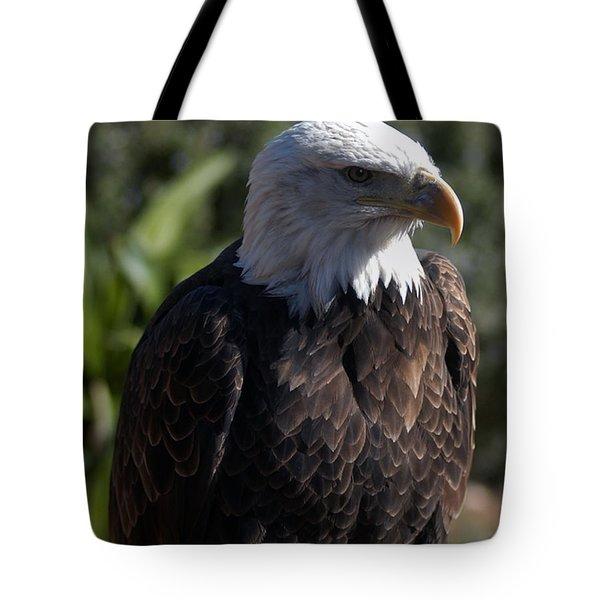 Portrait Bald Eagle  Tote Bag