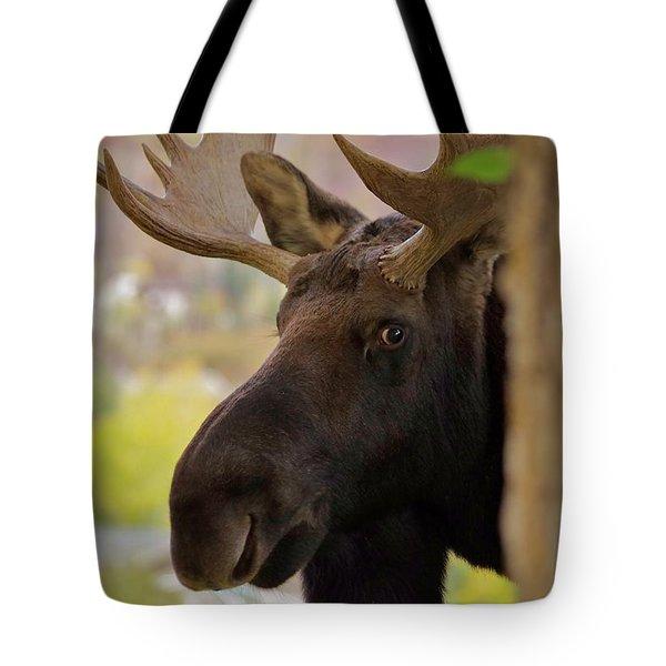 Portrait Of A Bull Moose Tote Bag by Matt Helm