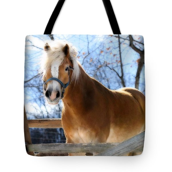 Tote Bag featuring the photograph Portrait Of A Haflinger - Niko In Winter by Angela Rath