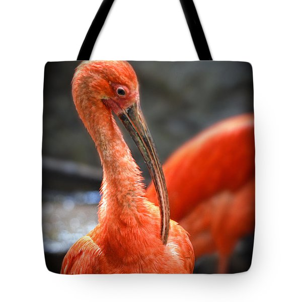 Portrait Of A Scarlet Ibis Bird  Tote Bag