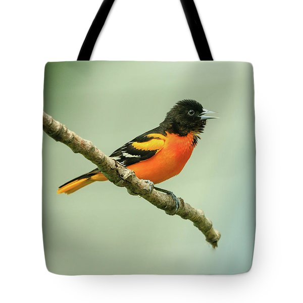 Portrait Of A Singing Baltimore Oriole Tote Bag