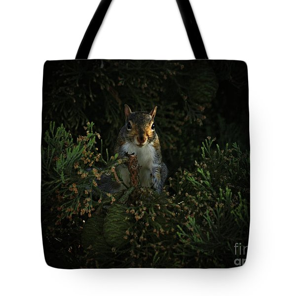 Portrait Of A Squirrel Tote Bag